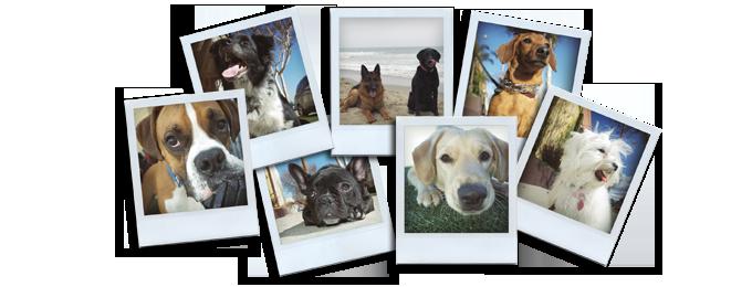 Coaching Canin - Education canine à domicile - chien de compagnie - Paris et région parisienne